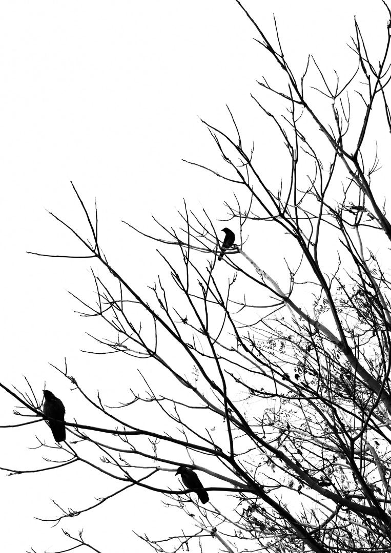 Krähen Baum
