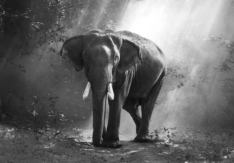 Elefant im Wald